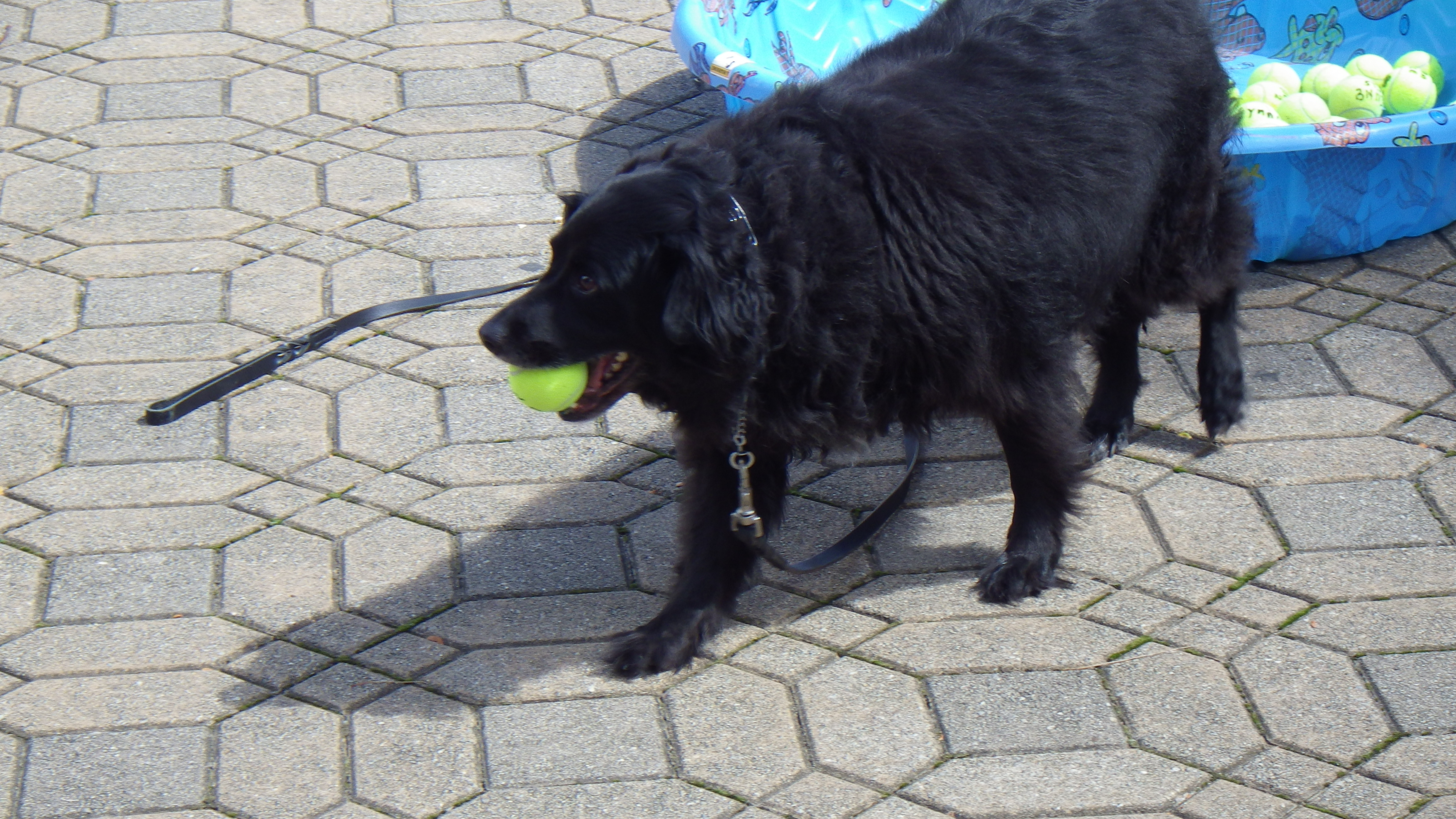 Melanie fetches the winning tennis ball